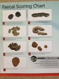 Cat Stool Chart Lets Talk About Poo Cat The Vet