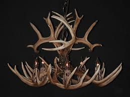 white tail antler chandeliers