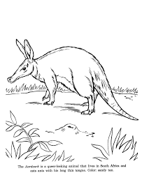 Small Picture Animal Drawings Coloring Pages Aardvark animal identification