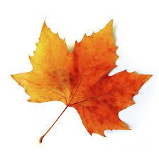 Image result for fall leaf image