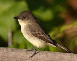Image result for small birds in missouri