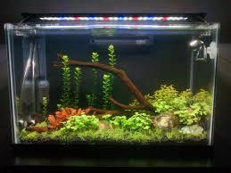 Finnex Stingray Aquarium Led Light Finnex Stingray Users Page 2 The Planted Tank Forum