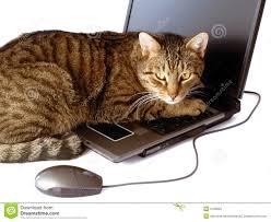 """Résultat de recherche d'images pour """"image securisé de chat"""""""