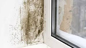 Mold In Bedroom