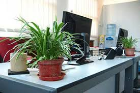 decorative plants for office. Green Home Decor That Cleans The Air, Top Eco Friendly House Plants Decorative For Office G