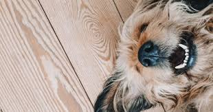 Dog Teeth Health Chart How To Tell The Age Of A Puppy Using Their Teeth Embark