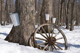 Image result for free pics of maple syrup