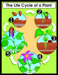 Plant Chart Carson Dellosa The Life Cycle Of A Plant Chart 6358
