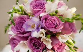 best pictures beautiful purple white flowers bouquet wallpapers
