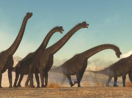 brachiosaurus size super size asaurus how did dinosaurs get so big brains on a