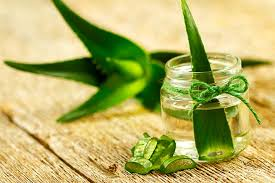 interesting facts about aloe vera for kids aloe vera for kids