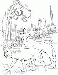 Small Picture Coyote Coloring Pages Coloring Home