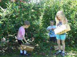 apple orchards near me. apple-pickin apple orchards near me