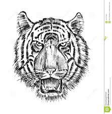 японский одичалый тигр азиатский животный кот профиль головы или