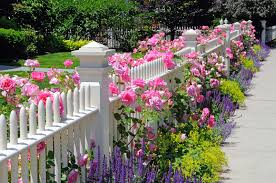 garden fence pink roses sage sdwell catmint