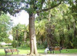 garden company. Modren Garden Cape Town City Park Capetown Park To Garden Company