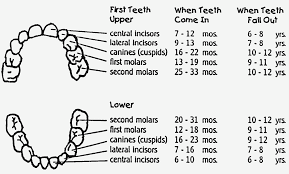 Teething Chart For Babies 12 Easy Rules Of Tooth Loss Age Chart Chart Information