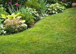 how to kill weeds in garden. how to kill weeds without killing your lawn | the home depot\u0027s garden club in m