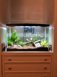 29 Gallon Tank Light My 29 Gallon Tank Is Beginning To Get Settled And I Have To