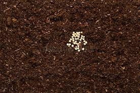 fertile garden. Download Fertile Garden Soil Texture Background Top View Stock Photo - Image Of Seeds, Frame I