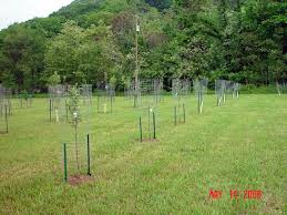 Keeping Deer Out Of The Garden Works Like A Charm  Gardening In Keep Deer Away From Fruit Trees