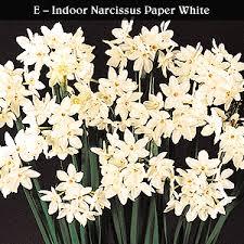 White Paper Flower Bulbs Fundraising Flower Bulbs Dutch Mill Bulbs