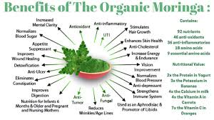 92 Nutrients 46 Antioxidants In One Tree Moringa Oleifera