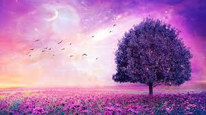 Purple Flower wallpaper HD