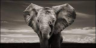Elephant Wallpapers ...