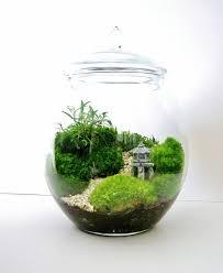 Asian Landscape Moss Terrarium with Miniature Path, Pagoda & Tree in a  Large Decorative Glass Jar