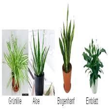 Emejing Pflanzen Fürs Schlafzimmer Gallery Erstaunliche Ideen