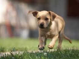Czy weganie torturują psy?