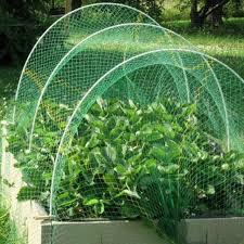 bird netting for garden. Fine Garden 4x5m LARGE STRONG ANTI BIRD NETTING Garden FruitVegetableCropPond  Protection Inside Bird Netting For E