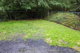 garden outside of angeles clinic for animals in port angeles washington