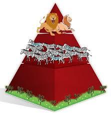 food web pyramid food chains and food webs