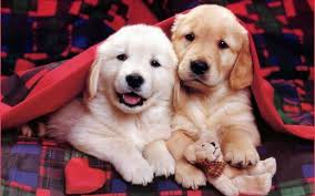 Cute Puppy Wallpapers - Top Free Cute ...