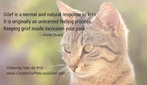 Loss Of A Cat Quotes Extraordinary Pet Loss Quotes Center For Pet Loss Grief