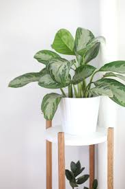 Cool Home Interior Accessories With Tree Like House Plants : Gorgeous Image  Of White Potted Mid