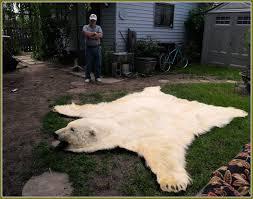 large bear skin rugs