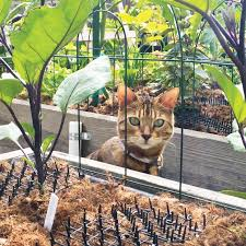 cat mat keeps this cat out of the raised garden beds