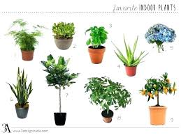 house plants pictures and names common indoor plants house plants names common house plants names all