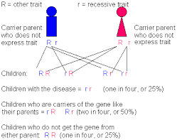 Cystic Fibrosis Inheritance Pattern New Autosomal Recessive Cystic Fibrosis CF Sickle Cell Anemia SC
