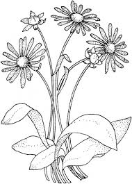 Small Picture daisy coloring sheets wwwmindsandvinescom