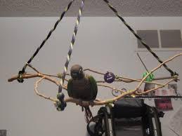 diy hanging swinging perch shyra 004 jpg