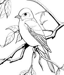 Check out 20 cute bird coloring pages printable for your kids here Freebie Burgess Bird And Animal Book Images Bird Coloring Pages Bird Book Coloring Pages