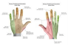 Finger Rom Chart Physical Exam Of The Hand Hand Orthobullets