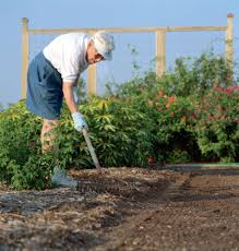 the bexar county master gardener program is accepting s for its next intern training texas a m agrilife extension service photo
