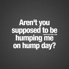 Hump Day Quotes Magnificent 48 Catchy Hump Day Quotes And Sayings Collection Myusapics