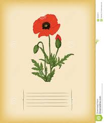 poppy template old paper template with red poppy flower vector stock vector