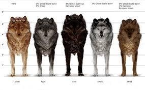 Vlkodlaci Werewolf